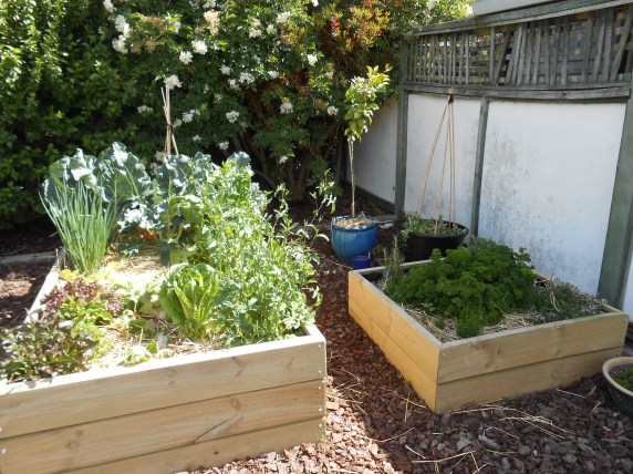 Raised beds built from scratch